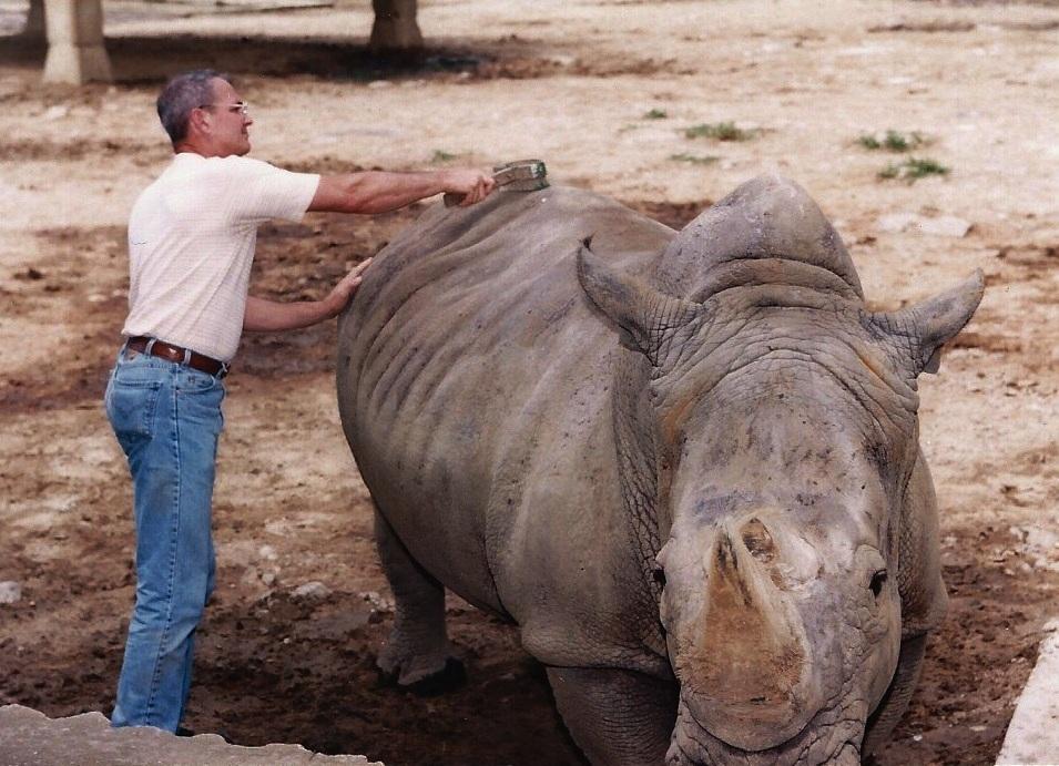 Taming a white rhino in Korea