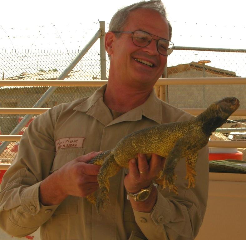 """Dhub"" Lizard in Saudi Arabia"